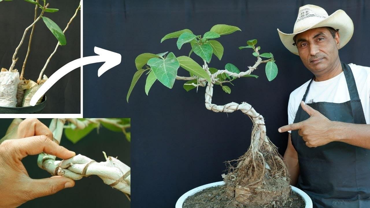 Banyan Bonsai Tree Making for Beginners