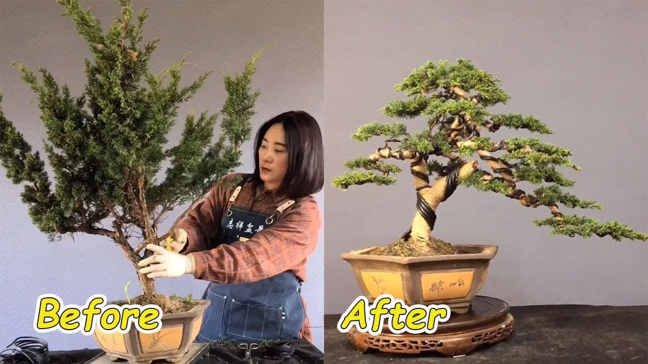 How to bend a bonsai