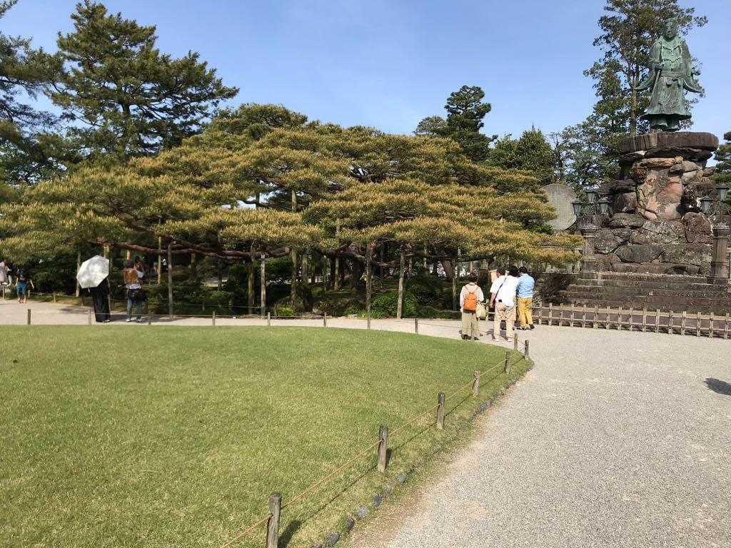This pine I saw in Kenroku-en in Kanazawa