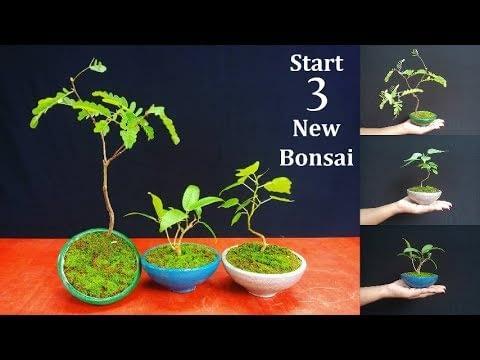 How to Start Bonsai