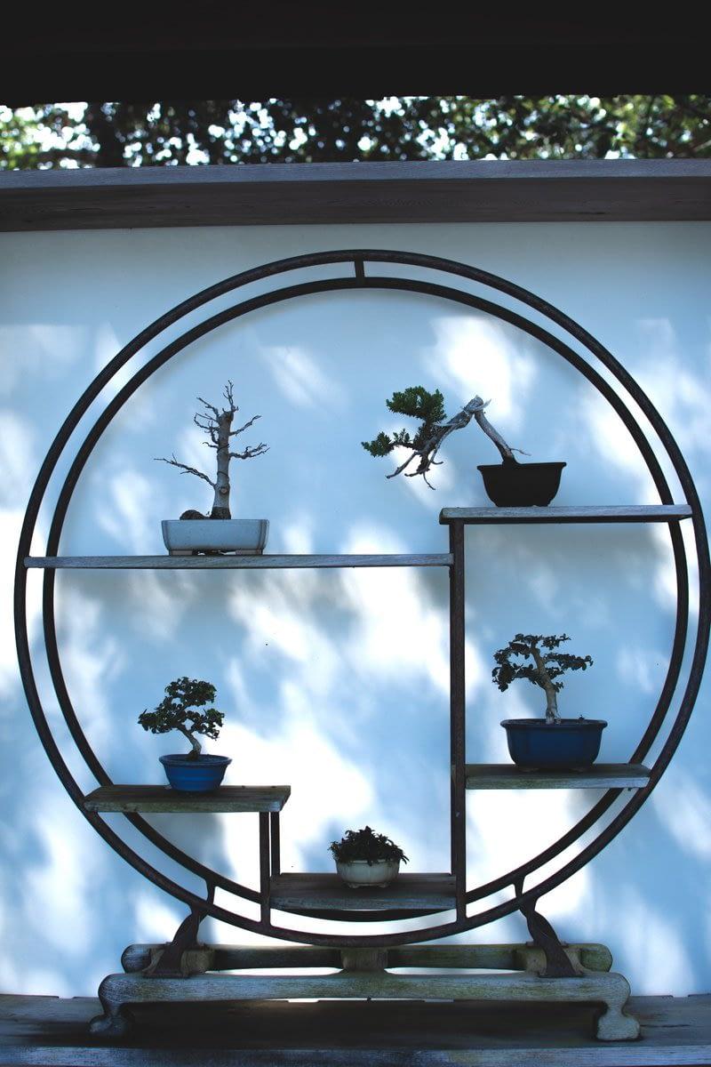 Gorgeous bonsai