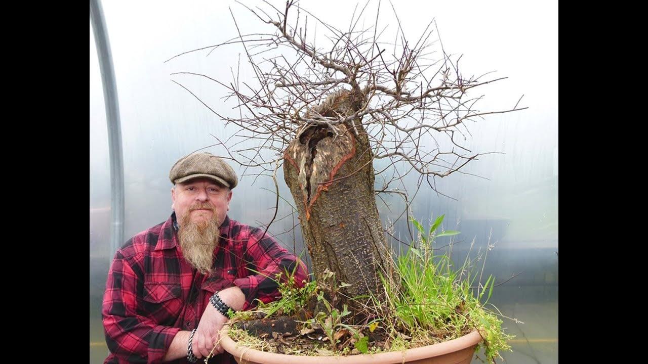 Graham Potter Does Bonsai Work