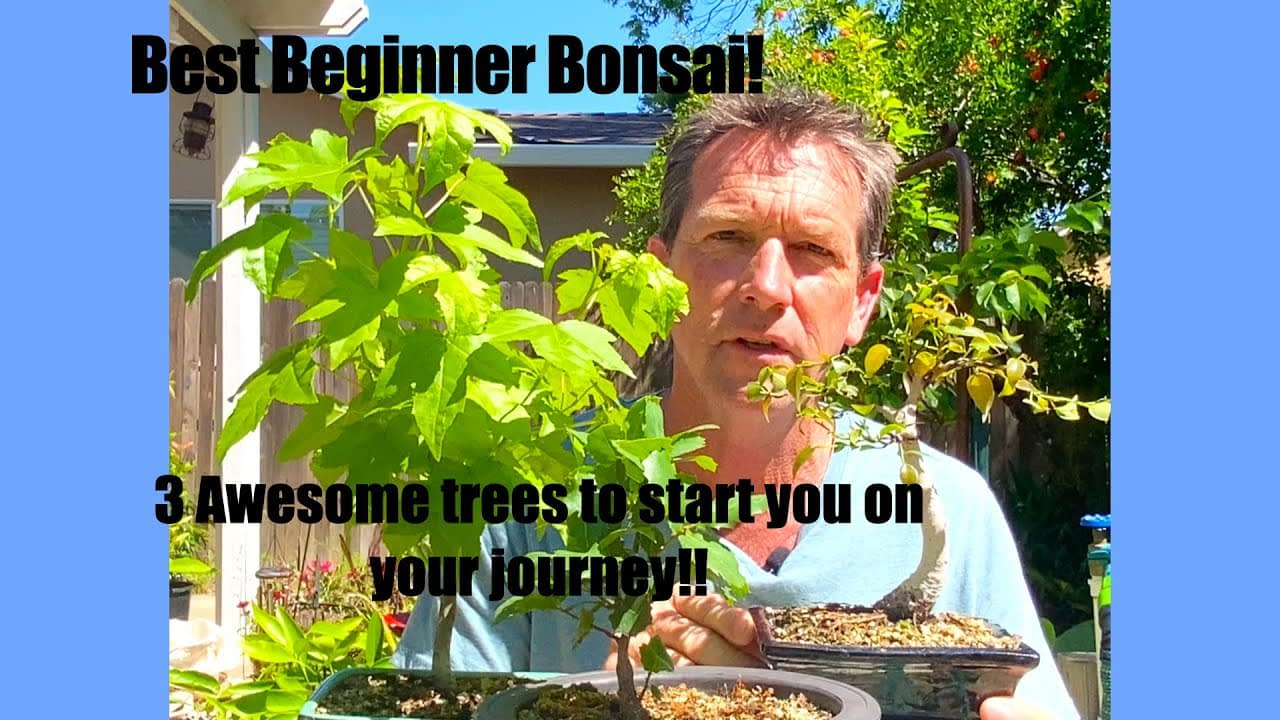 3 Awesome Beginner Bonsai Trees