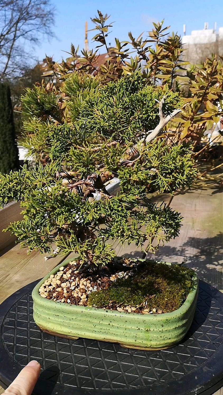 Gave my juniper a new pot