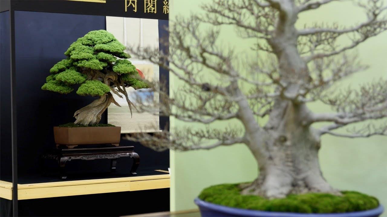 Top 20 Bonsai Trees